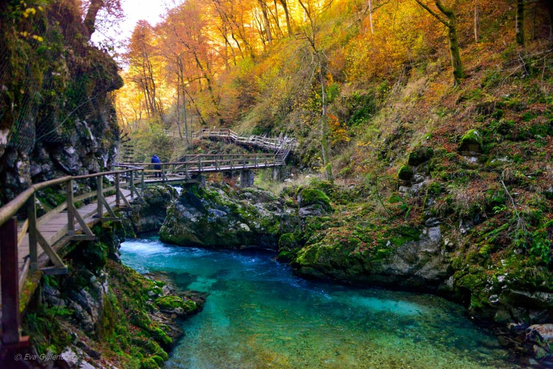 Hösftfärger under en vandring i Vintgar Gorge, Slovenien
