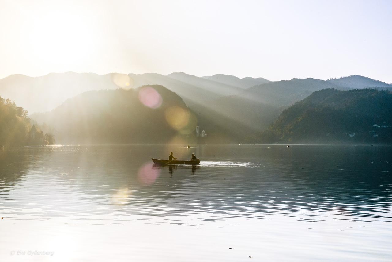 Roddare i solnedgång vid Bledsjön