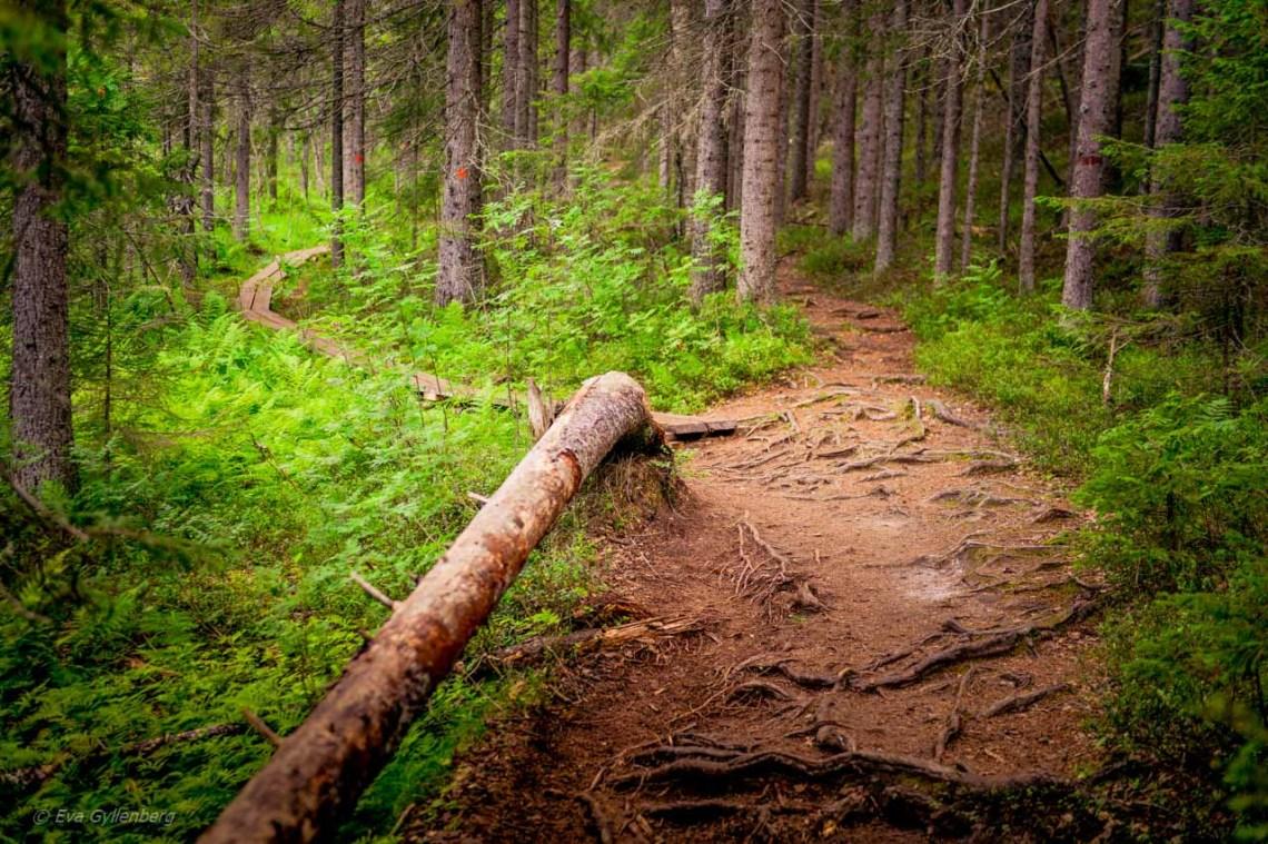 The path up to Slåtdalsskrevan