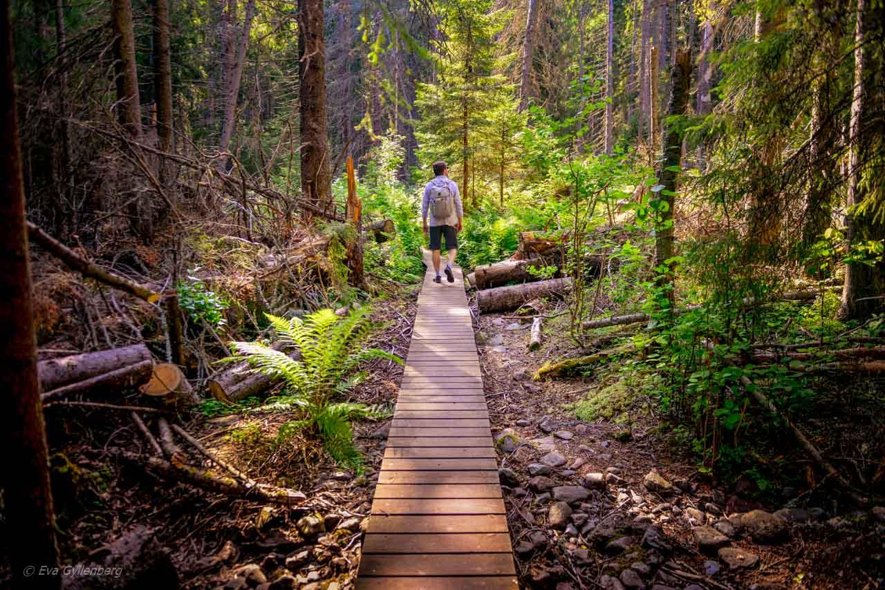 Genom Skuleskogen