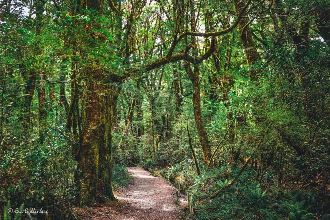 Vandringsled i Mount Aspiring