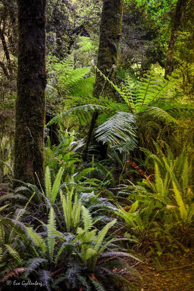 Tjock växtlighet i Mount Aspire
