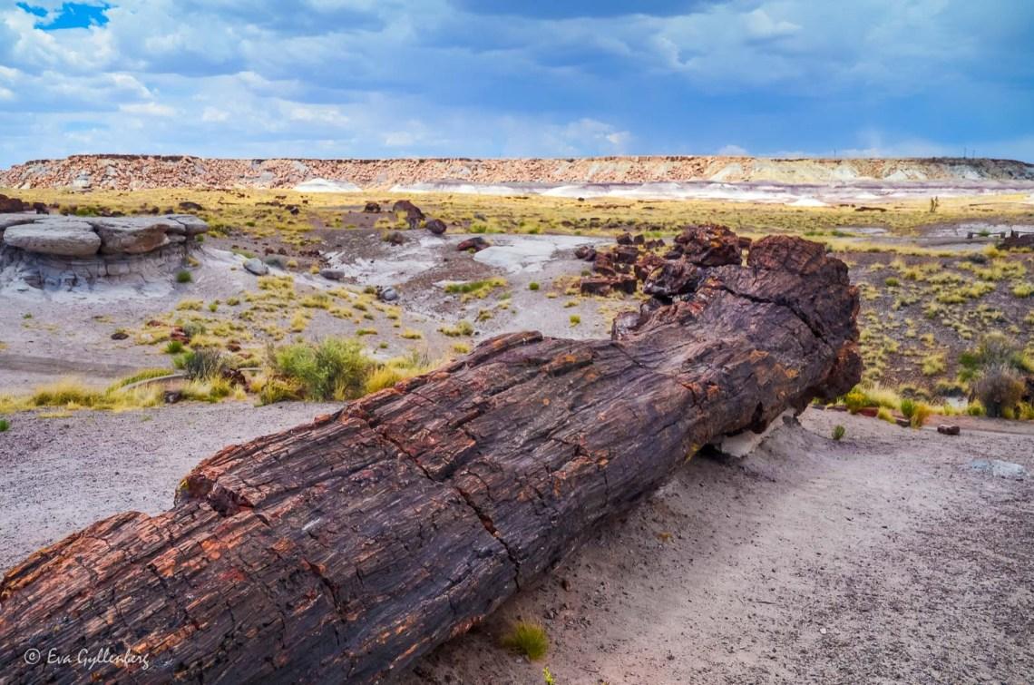 Förstenad trästock i Petrified Forest