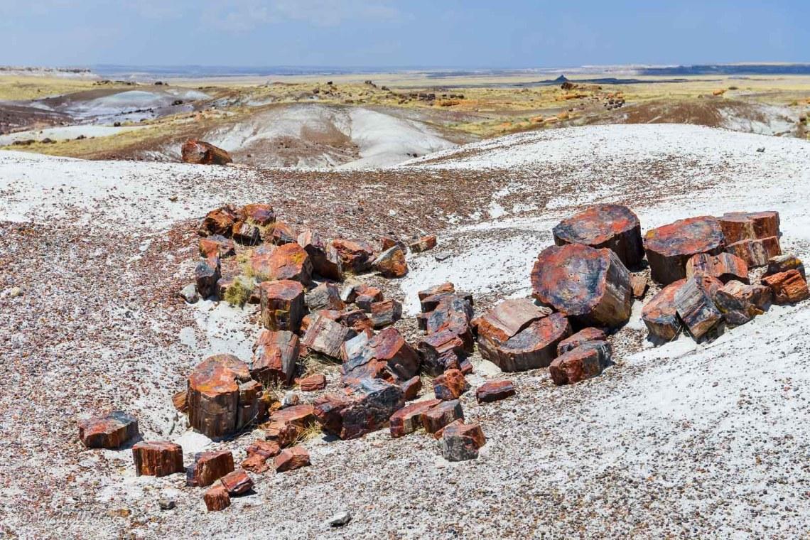 Trädstockar i sten i Petrified Forest
