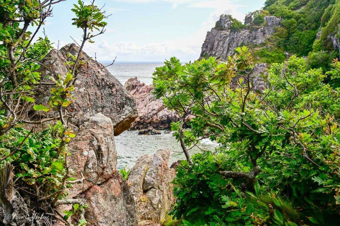 Almost tropical plants by the sea in Kullaberg