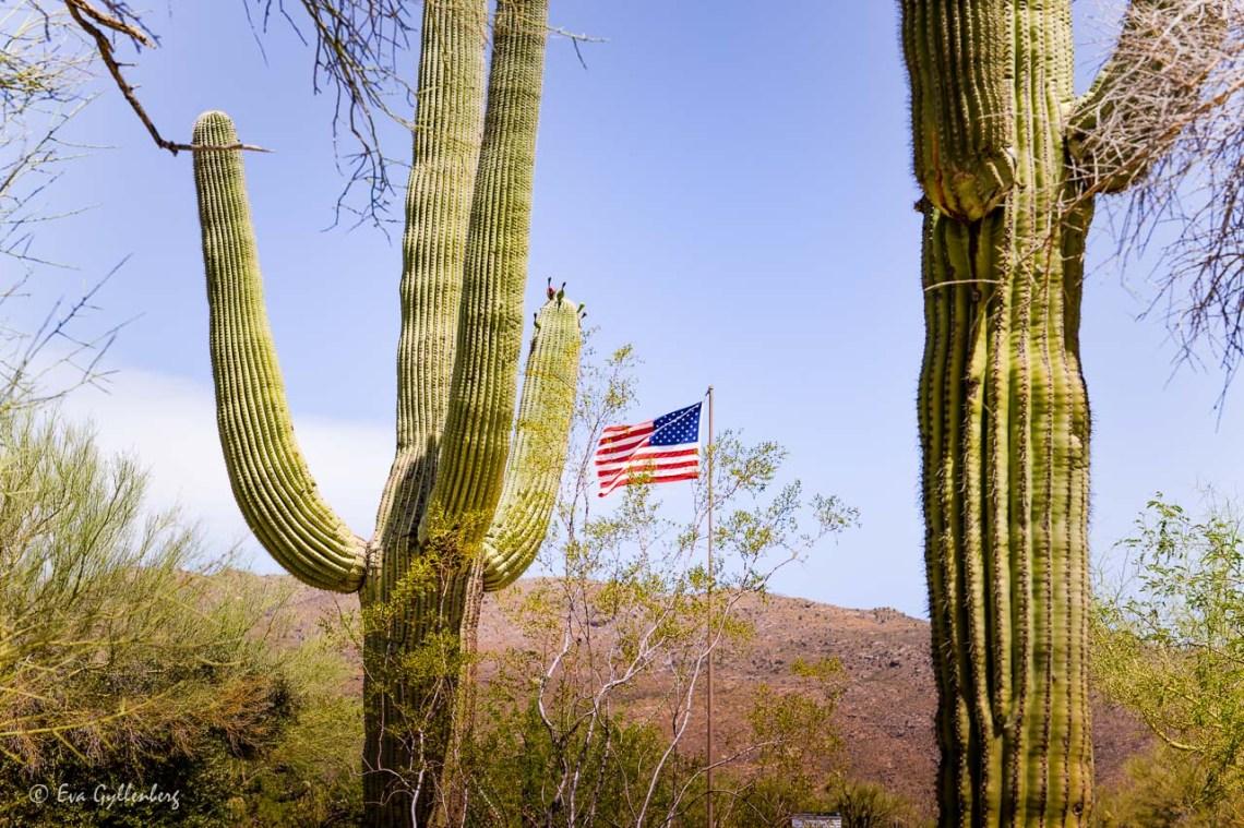 American flag and big saguaro