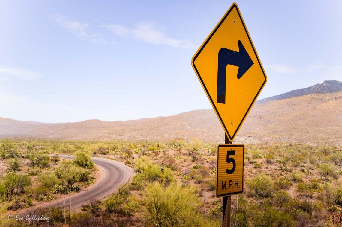 Road in Saguaro National Park