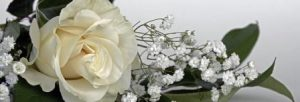 benefits of white roses