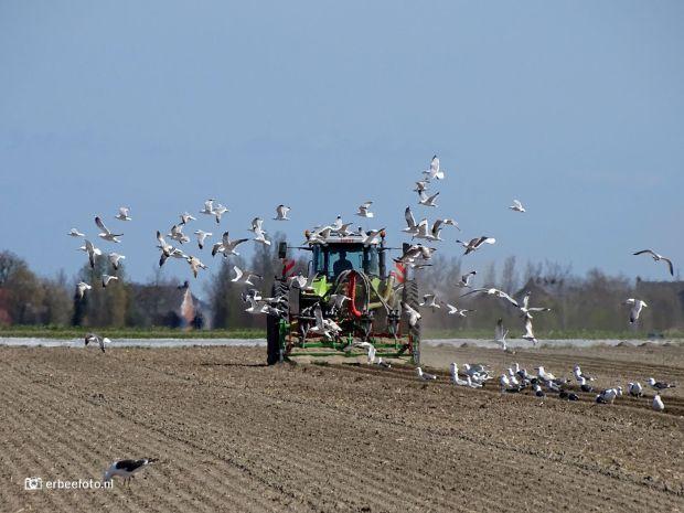 investeren in landbouwgrond - Boer met tractor op het land bij Zoutkamp