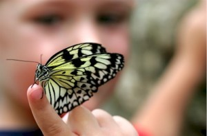 Boy_With_Butterfly0 min read