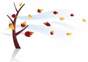 Pohon, Daun & Angin