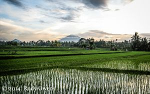 Sunrise over rice field near Ubud, Bali