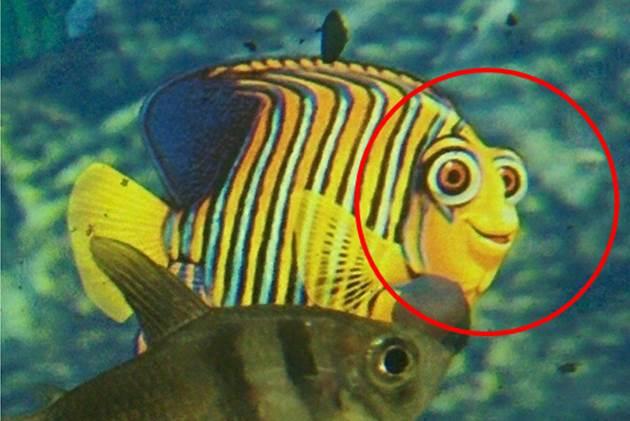 Ein Fisch mit dem Grinsen  Rue25 Blog