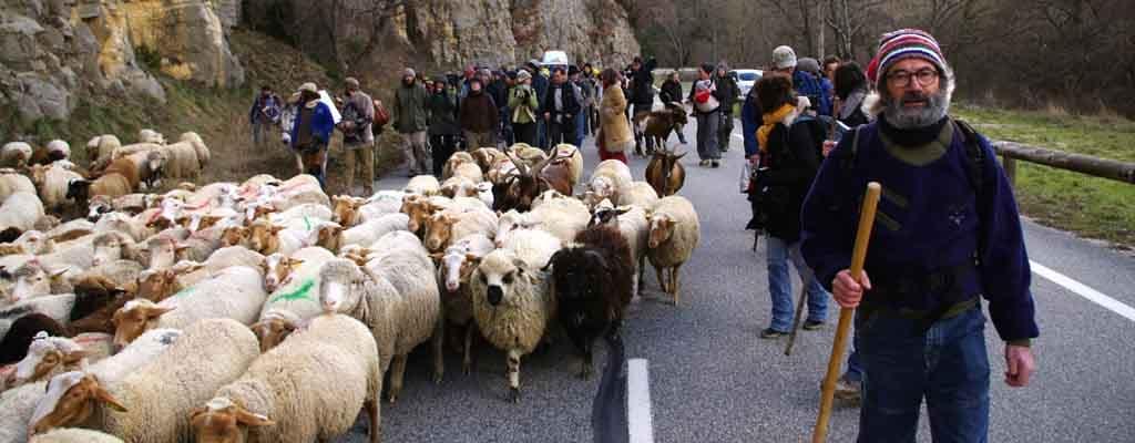 manif-Transhumance-puce-moutons