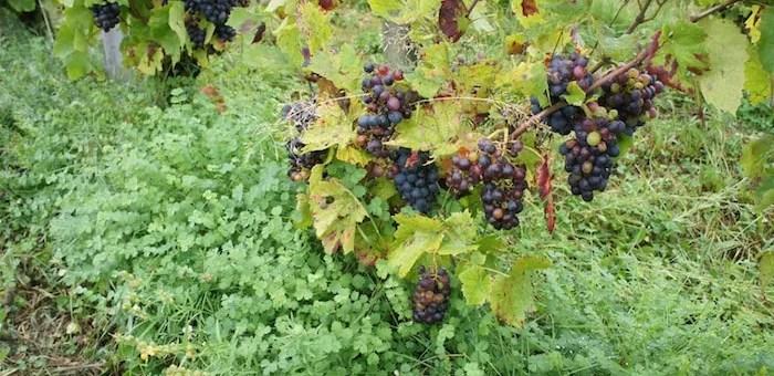 «Et si le vin sauvait l'agriculture ?», un débat à Lyon le samedi 5 novembre