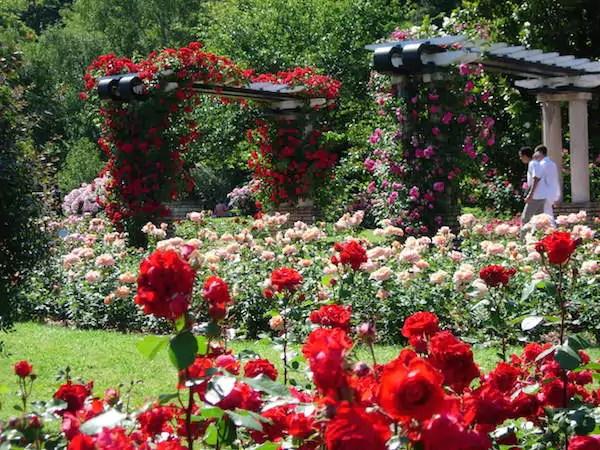 La grande roseraie du parc de la Tête d'Or. ©Ville de Lyon