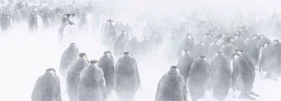 Antarctica au musée des Confluences, ou les hallucinations polaires