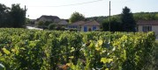 Une partie de l'extension du village de Clessé s'est faite au milieu des vignes. ©LB/Rue89Lyon