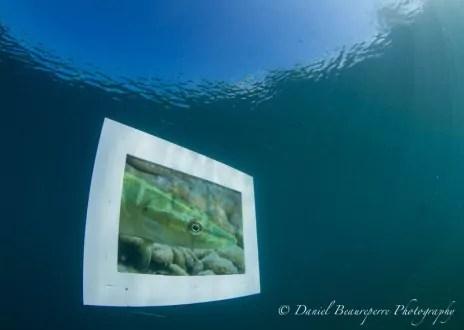 """Vue de l'exposition sous-marine, """"Faites de la plongée"""", 22-23 septembre 2012, Gravière du Fort, Holtzheim. Photo: Daniel Beaureperre"""