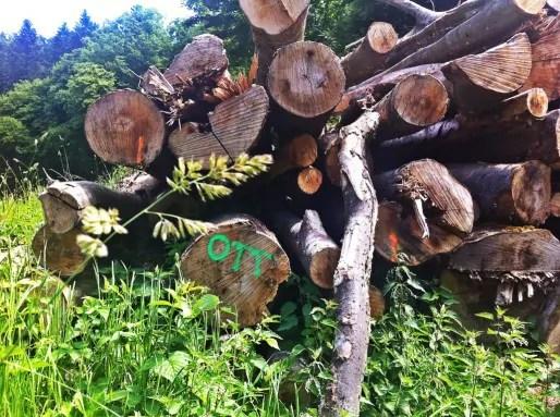 Vincent Ott a racheté de nombreuses parcelles dans le massif - ici, un tas de grumes à son nom en bordure d'une parcelle coupée à blanc. Il est également président du Centre de la propriété forestière de Lorraine-Alsace (Photo MM / Rue89 Strasbourg)