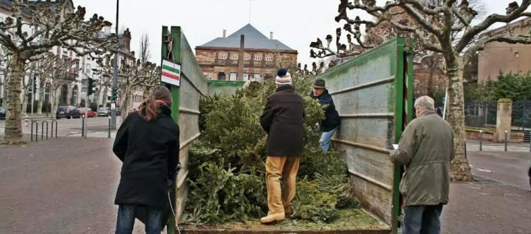 Collecte des sapins de Noël samedi 10 janvier