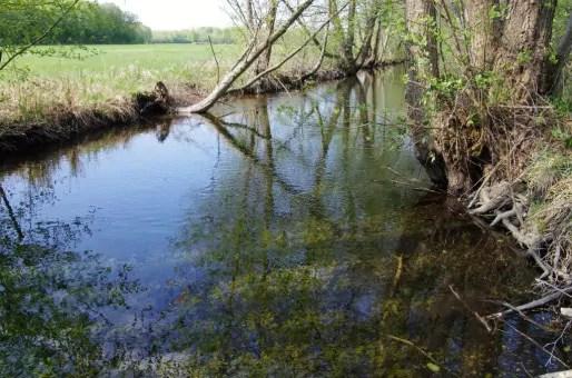 Un ruisseau (Photo Pierre Sigwalt / Alsace Nature)