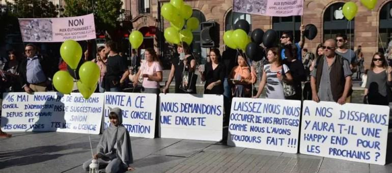 Euthanasies de chats à la SPA Strasbourg : une association porte plainte
