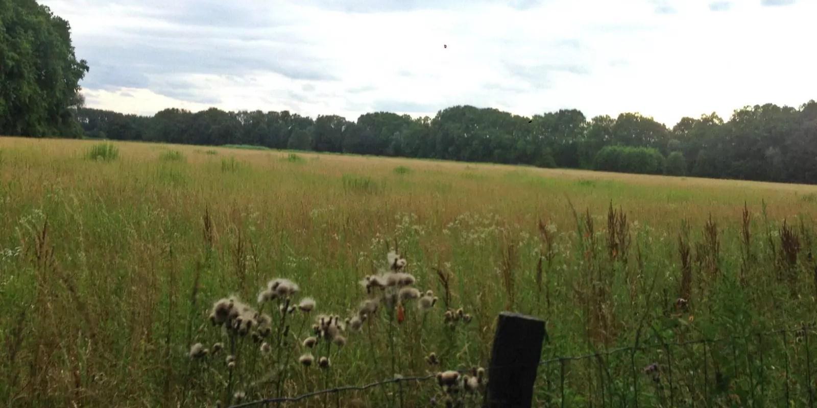 «Classons la forêt de la Robertsau en réserve naturelle et préservons un poumon vert de Strasbourg»