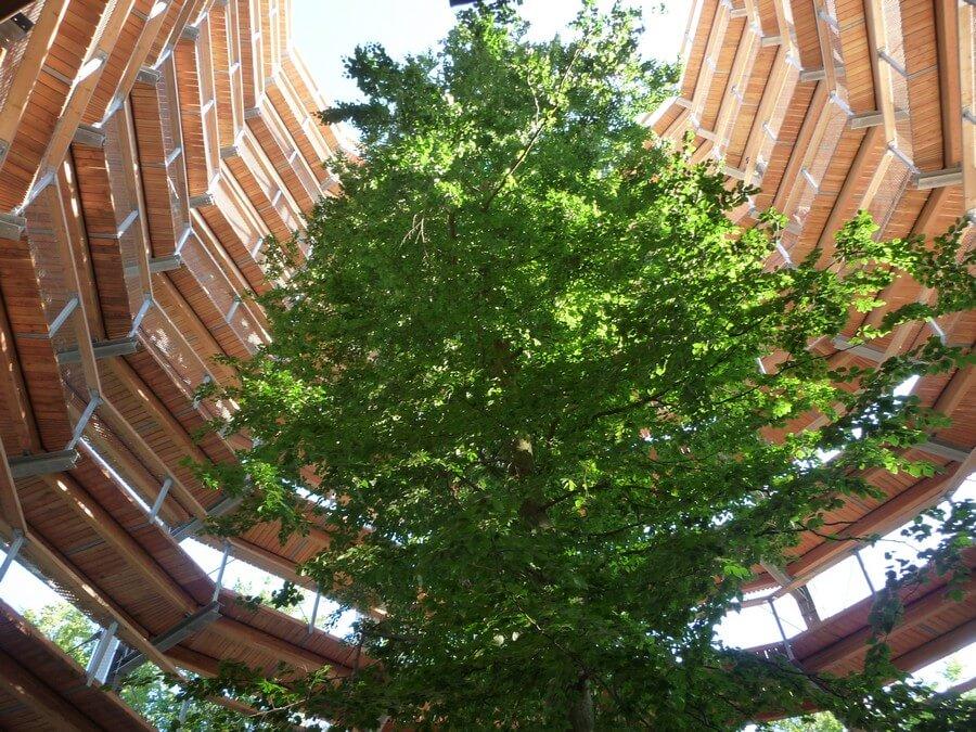 Adlerhorst Baumwipfelpfad von unten