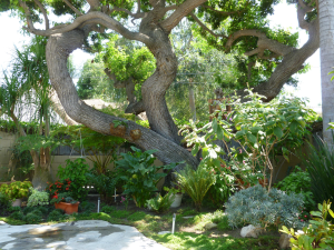 Bungalow Garden, Orange County
