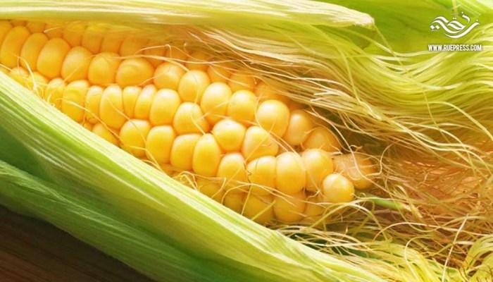 فوائد مذهلة في شاي شعر الذرة لعلاج أمراض عديدة تجبرك على تناوله