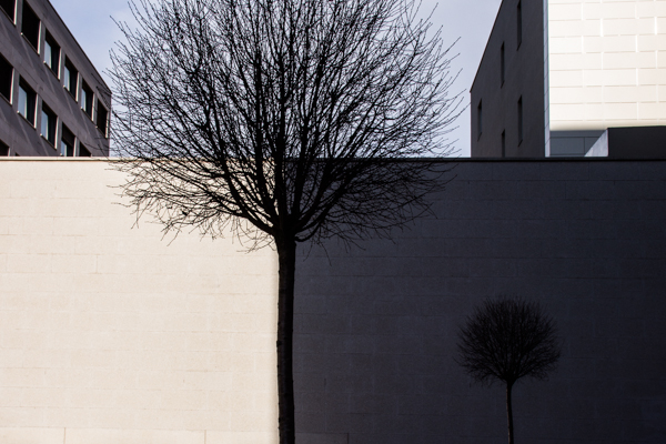 Trees and walls