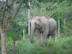Elefant aus der Naehe Elefanten Safari Kuiburi Nationalpark Thailand