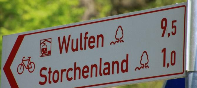 Stippvisite im Storchenland – Hervester Bruch in Dorsten