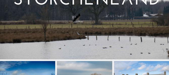Ausflugtipp Storchenland – Die Frühlingsboten der Lüfte sind da
