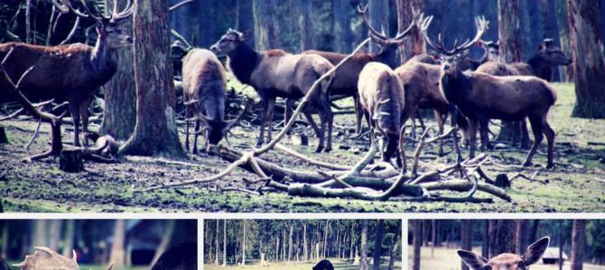 Ausflugstipp Naturwildpark Granat in Haltern-Lavesum