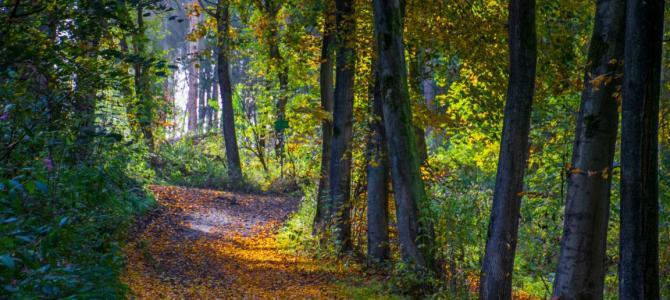 20 Tipps für schöne Spaziergänge im Ruhrgebiet