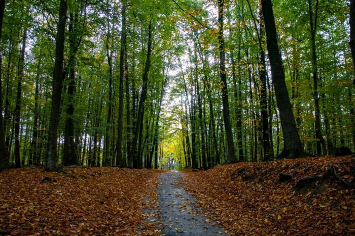 Start der Tour durch den Wald