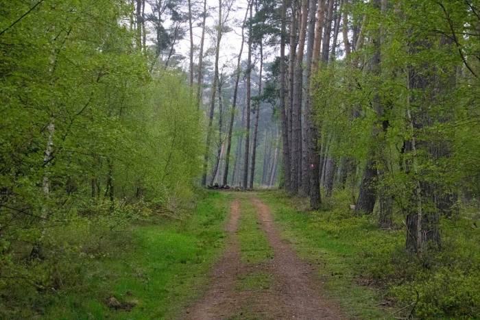 Einstieg in den Wald