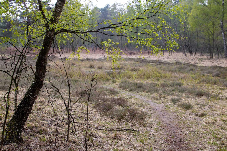 Blick auf die Moorlandschaft