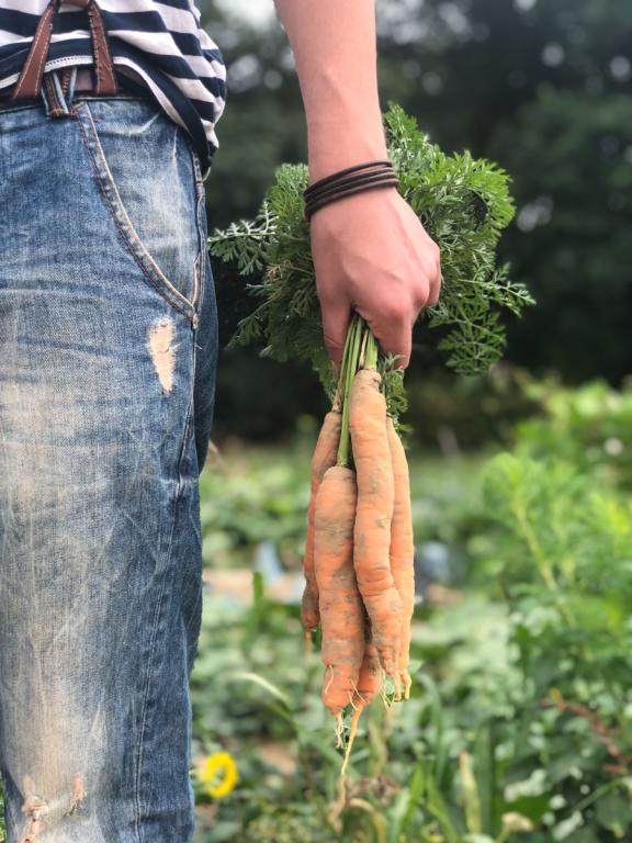 Spart das Fitnessstudio: Der eigene Gemüsegarten