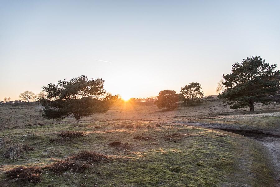 Westruper Heide Haltern am See