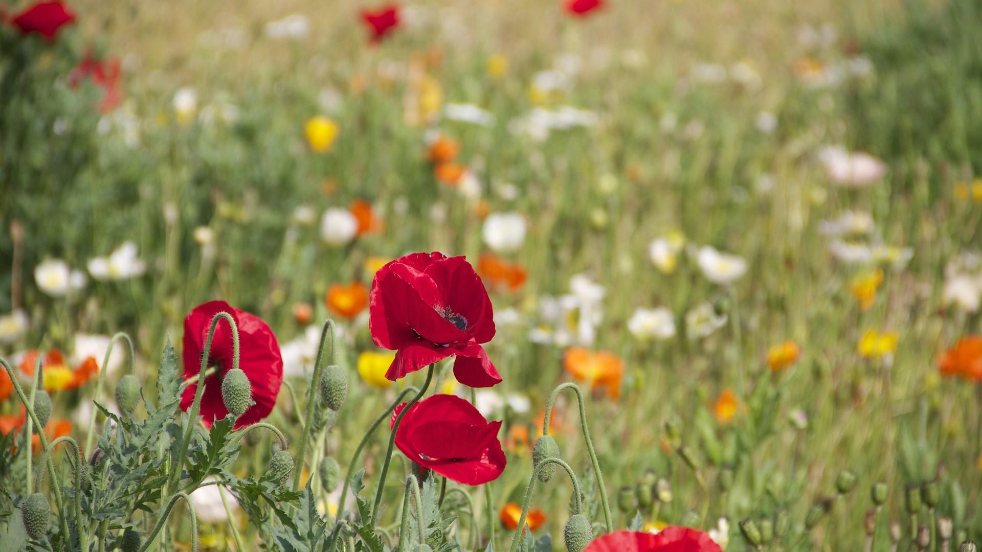 6 dingen die jij kunt doen voor een beter milieu