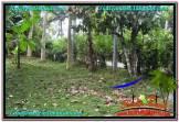 TANAH di TABANAN BALI DIJUAL MURAH Untuk INVESTASI TJTB295