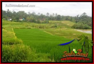 Tanah Murah di Tabanan Bali Dijual 2,000 m2 di Tabanan Selemadeg