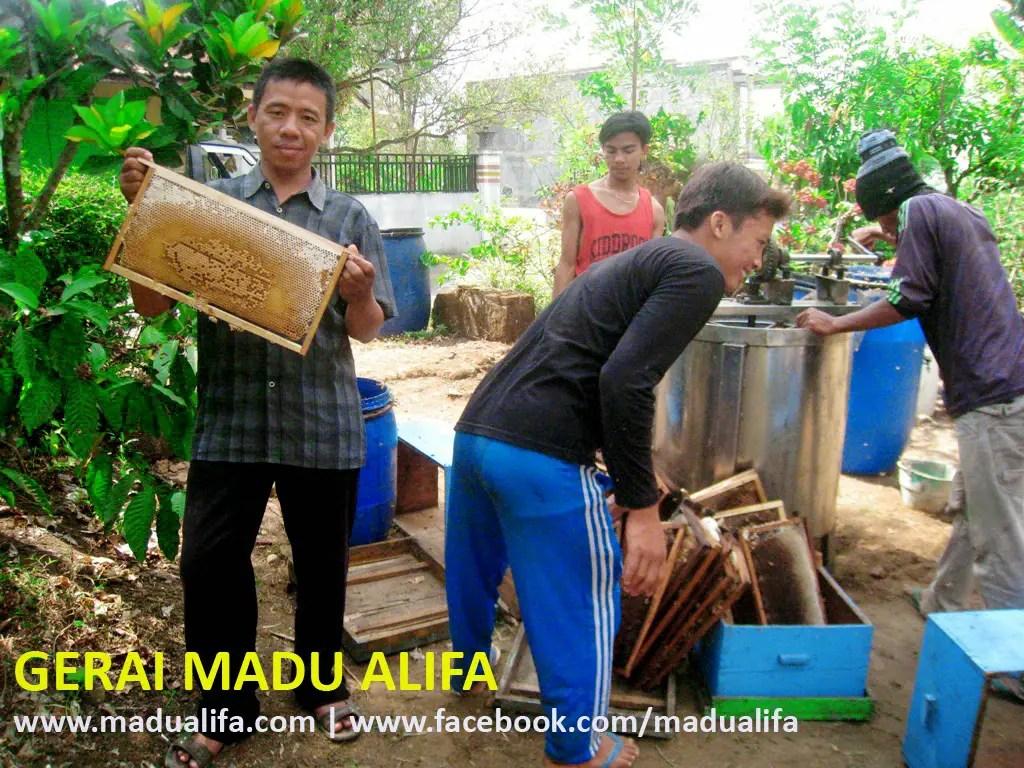 Madu Alifa RR 2