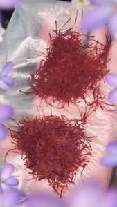 saffron kashmir dan iran