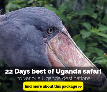 22-days-best-of-uganda-safari2