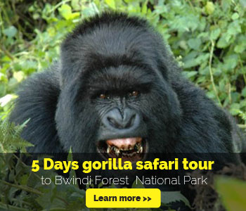 5-days-gorilla-safari-uganda