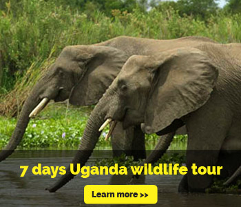 7-days-wildlife-safaris-uganda2